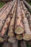 Log trees. Group of brown log trees Stock Image