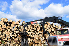 Log Truck with Loader in Front of Pulp Pile Stock Photo