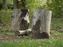 A log between two stumps. Simple composition of a log and two stumps Royalty Free Stock Images