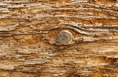 Log velho com furos da larva de carcoma Foto de Stock Royalty Free
