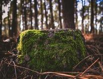 Log verde feliz imagens de stock