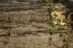 Log and Vines. Closeup of bark royalty free stock image