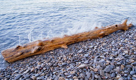 Log washed ashore Stock Image