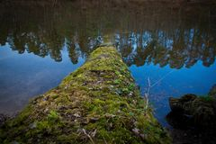 Log in water lake conifer mirror stock photography