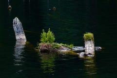 Log in water. Old mossy sunken broken log in lake water Royalty Free Stock Image