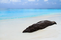 Log on the white beach Stock Photography