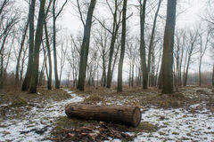 Log in the winter dark foggy forest Royalty Free Stock Images