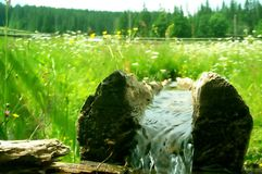 Log With Fresh Water Stock Photography