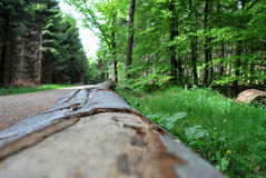 Log of wood. A cut down tree lying by the forrest road Stock Image