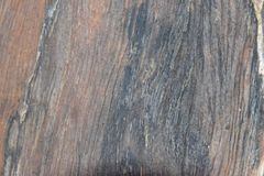 Log of wood. Details of log of wood stock image