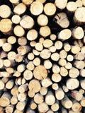 Log wood. Materials stock photos
