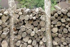 log wood cut texture Royalty Free Stock Photo