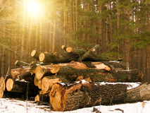 Log Wood Sun Stock Image