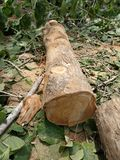 Log of wood stock images