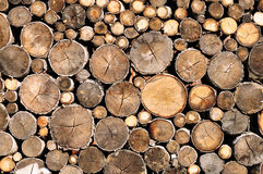 Log wood texture Stock Images