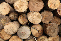 Log wood texture backgrounds. Cut log wood stacked up backgrounds stock photos