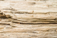 Log wood texture Royalty Free Stock Images