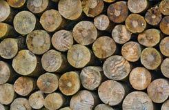 Log wood. Texture piled up royalty free stock image