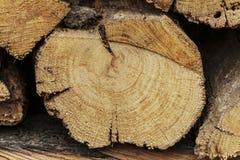 The log Stock Photo