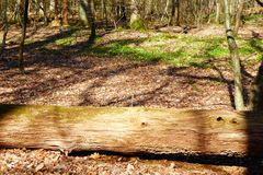 Log in Woods Royalty Free Stock Images