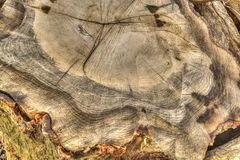 Log in woods Stock Photos