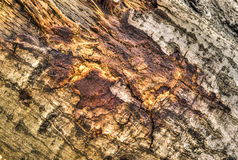 Log in woods Royalty Free Stock Image