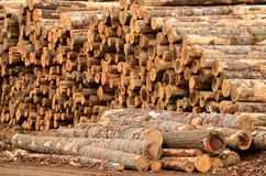 Log Yard. Operations in the log yard at a conifer log mill near Roseburg Oregon Royalty Free Stock Image
