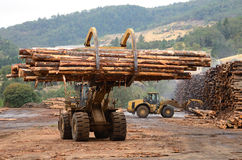 Log Yard Royalty Free Stock Photo