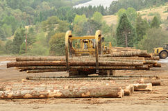 Log Yard Stock Photos