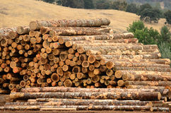 Log Yard. Operations in the log yard at a conifer log mill Royalty Free Stock Photo