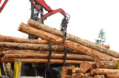 Log Yard Stock Photography
