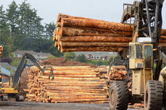 Log Yard Stock Image