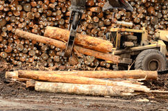 Log Yard Stock Photos