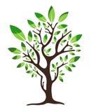 loga zielony drzewo ilustracja wektor