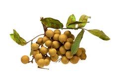 Logan Fruit su fondo isolato bianco fotografia stock libera da diritti