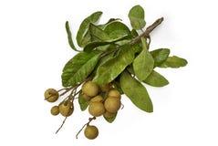 Logan, longan eller Dimocarpuslongan arkivfoton