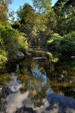 Logan rivier in het bos Royalty-vrije Stock Afbeeldingen