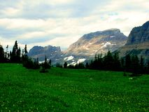 Logans' Pass. Yellow wildflowers dot a rich green meadow at Logan' Pass in Glacier national Park, Montana. A row of pine trees creates a border between the stock photos