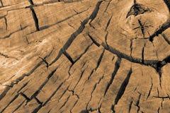 Logarithme naturel Photo libre de droits