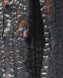 Logarithme naturel d'incendie de forêt Images stock