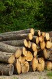 Logarithme naturel de chêne Photo libre de droits