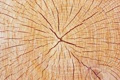 Logarithme naturel de division Images stock