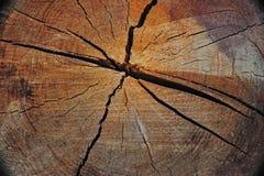 Logarithme naturel de vieil accroissement photographie stock