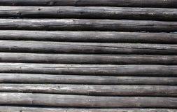 Logarithme naturel en bois Photos stock