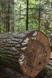 Logarithme naturel tombé d'arbre images stock