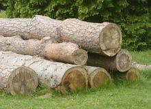 Logarithmes naturels d'arbre Photos libres de droits