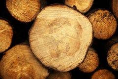 Logarithmes naturels d'arbre Photographie stock libre de droits