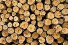 Logarithmes naturels d'un arbre sur le découpage de bois de construction. Image stock