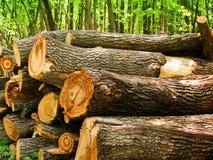Logarithmes naturels d'un arbre un chêne en bois Images libres de droits