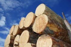 Logarithmes naturels de bois de construction Image stock